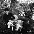 Telege za ovce, pri Lemežu, Ljubnica 1963 (4).jpg