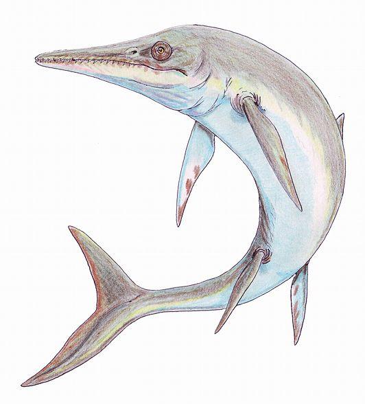 Voorbeeld van absolute daterende fossielen