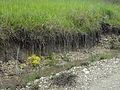 Terre gorgée d'eau aux Nauds (Entrepierres).JPG