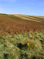Teviotdale hill countryside - geograph.org.uk - 578342.jpg