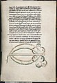 Text with zoomorphic diagram - Serpent (21490147382).jpg