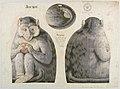 Textile, Jocko, 1892 (CH 18452181-2).jpg