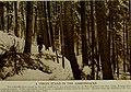 The American Museum journal (c1900-(1918)) (18160510355).jpg
