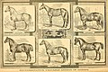 The American farmer's horse book; a pictorial cyclopedia of facts concerning the prominent breeds (1892) (17497213884).jpg