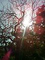 The Light from heaven.jpg