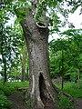 The Poem Tree, Wittenham Clumps.JPG