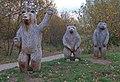 The Welcome Bears - geograph.org.uk - 625320.jpg