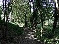The path through Coed Pen-yr-allt - geograph.org.uk - 1441803.jpg