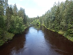 The river Pliussa near Serbino country, Pliussa district, Pskov region.jpg