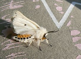 The road of the white ermine moth.jpg