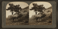 The whistling elk whose weird, flute-like cry echoes from hill to hill, Montana, U.S.A, by Keystone View Company 3.png