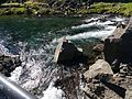 Thingvellir-Nationalpark Almanagjá-Schlucht 01.JPG
