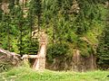 Thrilling and beautiful northern areas of pakistan.JPG
