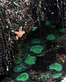 Tide pools at Pillar Point.jpg
