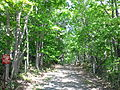 Tonebetsu-nature-park mouth-of-forest.JPG