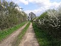 Track in Blossom - geograph.org.uk - 159716.jpg