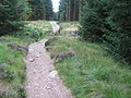 Track in Malling Forest - geograph.org.uk - 549539.jpg