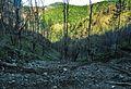Tragovi požara - panoramio.jpg