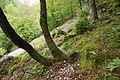 Trail in Kal-Koritnica 2.jpg
