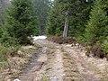 Trail near Sonnenkappe 06.jpg