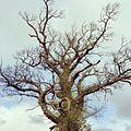 Tree - panoramio (64).jpg