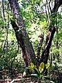 Tree Hill Nature Center02.jpg