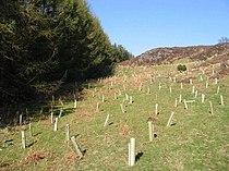 Tree planting - geograph.org.uk - 389349.jpg