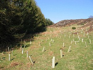 Habitat conservation - Tree planting is an aspect of habitat conservation. In each plastic tube a hardwood tree has been planted.