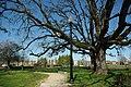 Trees at Orenco Station MAX stop - Hillsboro, Oregon.JPG