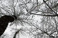 Trees from under.JPG