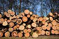 Treetrunks for fire burning wood at Hoge Erf farm Schaarsbergen 11 Februari 2014 - panoramio.jpg