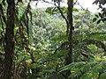 Tropisch regenwoud (6734924053).jpg