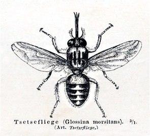 Abb. aus Meyers Lexikon 1888/90