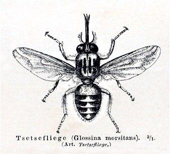 Tsetsemeyers1880