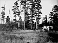 Tusayan National Forest - Pole - 1922.jpg