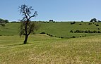 Tussen Remich en Bous, panorama foto7 2017-05-26 14.44.jpg