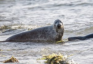 Two seals in the water.jpg