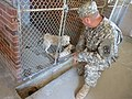 U.S. Army Lt. Col. Marion Collins, commander of the 2nd Battalion, 263rd Air Defense Artillery Battalion, South Carolina Army National Guard, offers reassurance to a rescued puppy Aug. 10, 2013, in Star, S.C 130810-Z-LJ054-001.jpg