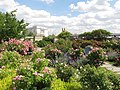 U.S. Botanic Garden in May (23751370926).jpg