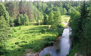 Dainava Forest - Dainava Forest and Ūla River