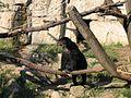 Un ours - Le Parc de la Tête d'Or - Lyon (14).JPG