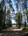 Valdaysky District, Novgorod Oblast, Russia - panoramio (2058).jpg