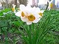 Verge flowers Delft.JPG