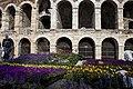 Verona mia fiore IMG 9578.jpg