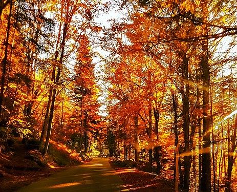 Viaggiando verso la Secchieta al tramonto - Foresta di Sant'Antonio in autunno - Vallombrosa (Reggello - Fi).jpg