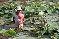 Vietnam sud 0711a.jpg