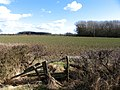 View towards Carington Spinney - geograph.org.uk - 713145.jpg