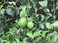 Views around Munnar, Kerala (47).jpg
