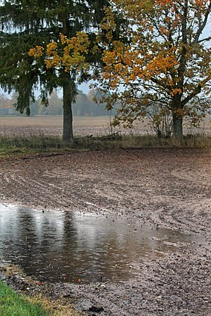 Rain - Rain falling on a field, in southern Estonia