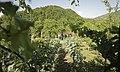 Vines in Georgia.jpg